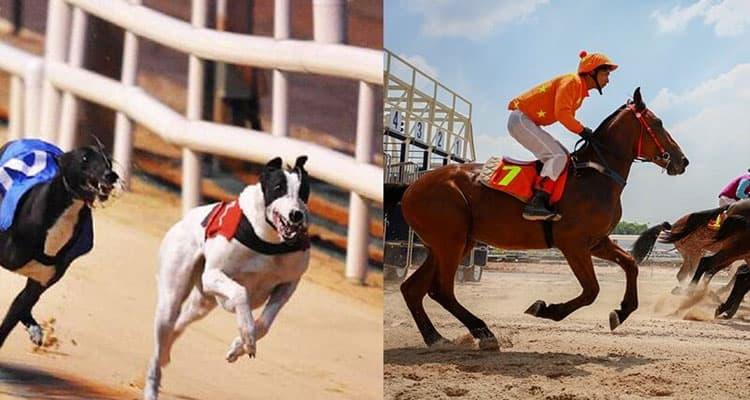 đua ngựa và đua chó